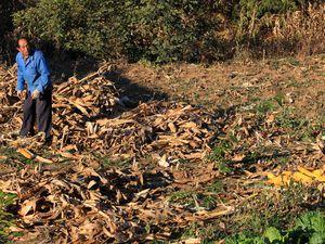 La culture agricole à Dongpo.