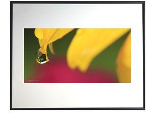 photo-de-fleur-de-tournesol-FL0534