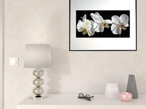 photo-d'orchidée-phalaenopsis-FL0373