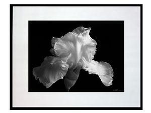 photo-fleur-iris-fond-noir-photo-noir-et-blanc-FL0285