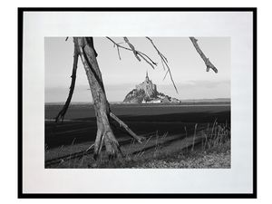 photo-arbre-et-mont-saint-michel-MS0187