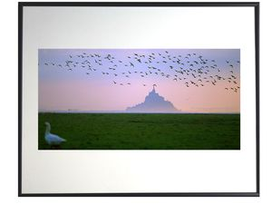 photo-migration-des-oies-au-mont-saint-michel-MS0026