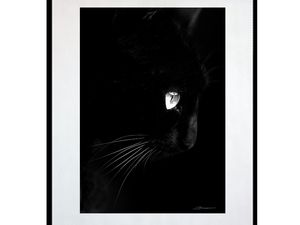 photo-de-chat-noir-AN2078