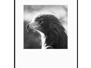 photo-de-jeune-aigle-AN2010