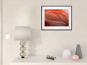 photo-du-plumage-de-flamant-rose-AN2015