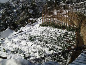 Gran nevada en Sol y Vida!!!