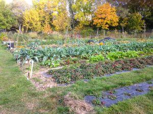 Le jardin partagé le samedi 22 octobre 2016