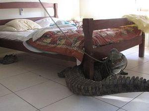 Un homme de 40 ans découvre un crocodile sous son lit après son réveil au Zimbabwe