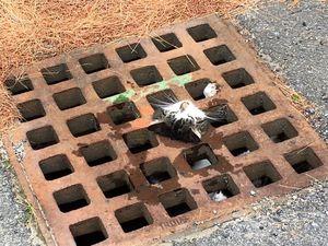 Des pompiers sauvent un chat coincé dans une plaque d'égout dans le Massachusetts