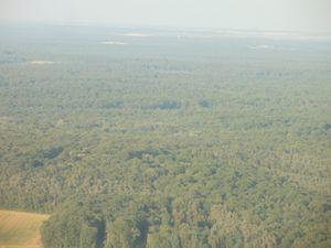 Une belle forêt à contourner dans les airs