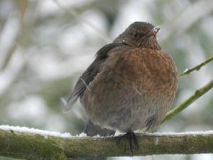 c'est l'hiver, n'oublions pas nos oiseaux...