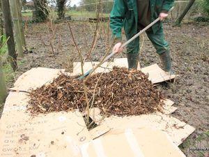 """profitez des emballages carton pour réaliser un massif , le but est d'éviter un désherbage fastidieux, Les cartons empêchent la germination des graines dans le sol, il protège le sol des intempéries, il participe à la production d'humus et empêche le BRF (bois raméal fragmenté/paillage) de se mélanger trop rapidement à la terre.On peut pailler avec du broyage , des feuilles, ou du gazon .""""cartonnage"""" +paillage participe à la ferlisation du sol !"""