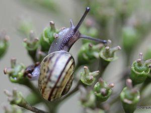 Chouette, j'ai trouvé un beau petit coin pour casser la graine !!  (fleur stérile et fruit de H.Mariesii Perfecta'