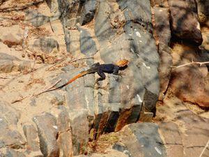 25/09/2013 - Epupa Falls, des mini-chutes Victoria, mais une liberté totale