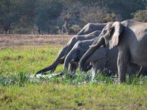 17/07/2013 - Safari à Kruger