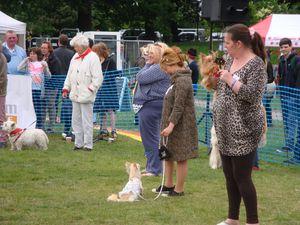 Testostérone et Pet Charity