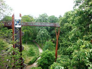 Rhizotron & Xstrata Treetop Walkway