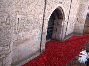 Poppies' day !