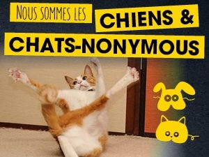 Chiens &amp&#x3B; chats l'Expo !