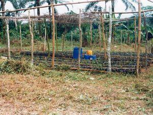 la plantation expérimentale de palmiers à huile et la pépinière