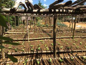 agroforesterie voila vers quoi nous devons nous tourner, agriculture sans labour, permaculture . . .