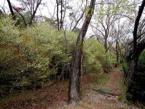 Parcs de Nagoya - Obata et Hachiryu Ryokuchi