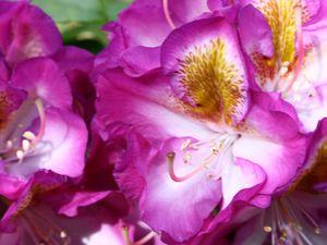Quelques fleurs pour vous
