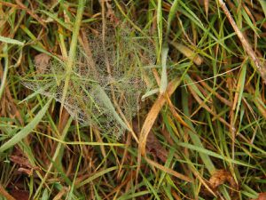 Ce papillon était bien planqué dans l'herbe est se confondait avec les feuilles mortes