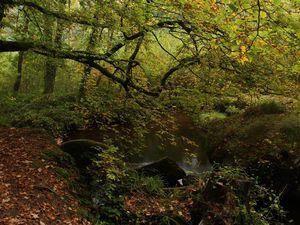Balade en forêt d'Huelgoat
