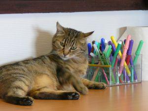 Un chat convivial