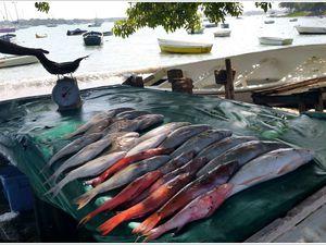 271 - Ile MAURICE 19, février 2016, Grand-Baie, flâneries, la plage, front de mer, boutiques, échopes, poissons, crustacés