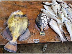 Les poissons d'avril de Mauritius.