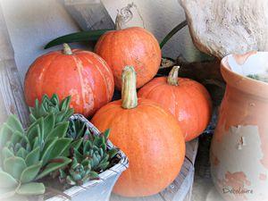 &quot&#x3B;Citrouilles et potimarrons , les  belles  couleurs  de     l 'automne...&quot&#x3B;