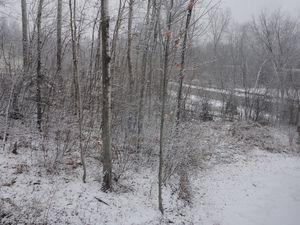 1ère vraie chute de neige: 17 novembre 2014