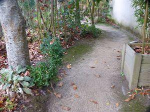 racines et pavés ....regardons où nous mettons les pieds !!!