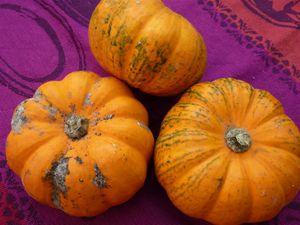Pomarines (oranges) et patidous (vert et blanc)