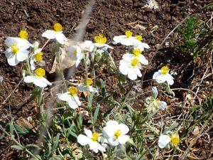 Les fleurs nous entourent...et tapissent les bas-côtés