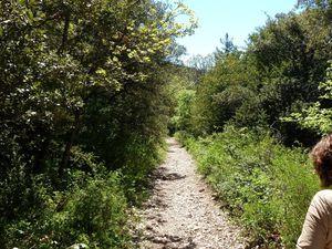 Le chemin monte ou descend au milieu des bois