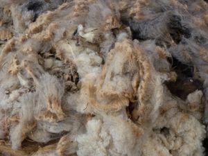 Les brebis avant et après...et la laine en tas.
