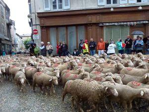 Un jeune berger menant le troupeau à différents lieux de la ville