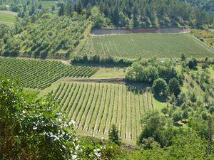 Les vignobles vus du village