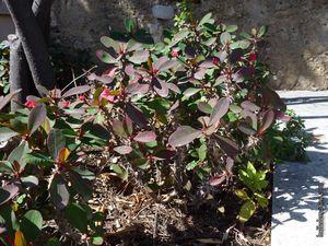 Quelques succulentes