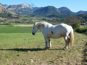 Des chevaux dans la Drôme pour #photodimanche