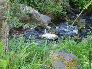 Le ruisseau du Rouchoux au niveau de Piquemeule