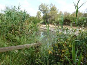 Marais, étangs, sansouires et roubines...