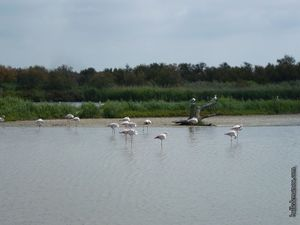 Des flamants roses endormis