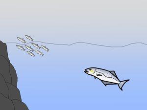 Pêche de la liche du bord