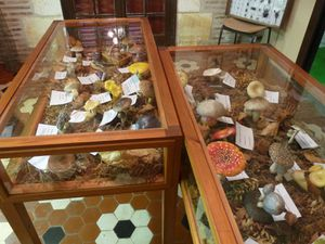 quelques autres aspects du Musée Voulgre