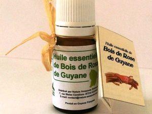 L'arbre bois de rose en Guyane (Aniba rosaeodora)
