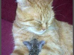 Hélas, une auto a écrasé la maman de cette portée de petits hérissons, regardez ce que fait cette chatte...